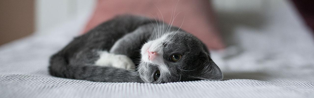 Un chat qui dort sur un lit