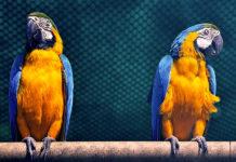 Apprendre une langue avec la mimétique linguistique