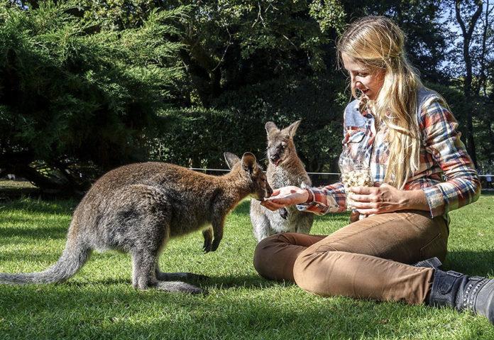 Apprendre l'anglais australien mais aussi l'argot australien