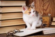 Lire en anglais pour s'améliorer